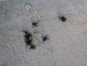 spider pest control cary