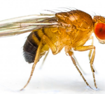 fruit-flies raleigh nc pest control