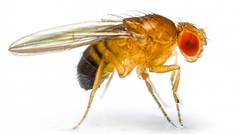 fruit-flies raleigh nc pest control