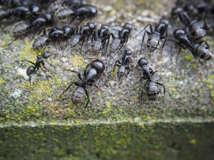 Raleigh Ant Control | Get Rid of Ants Today! | Stomp Pest