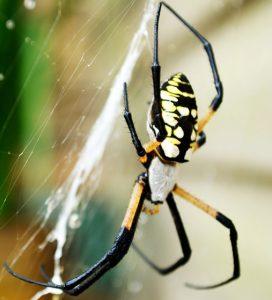 Spider Exterminator Raleigh