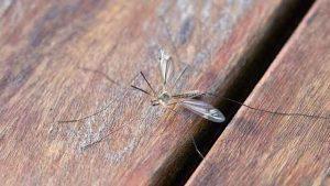 Pest Exterminator Durham