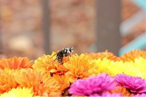 Wasp and Bee Pest Extermination Company Raleigh