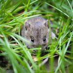 Raleigh rodent exterminator