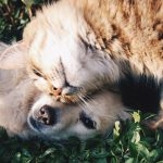 flea prevention in Raleigh