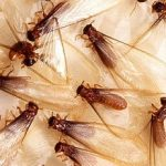 Termite Prevention in Raleigh