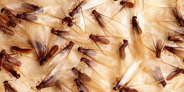 Prevent-Termites-in-Raleigh