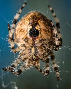 house-spider-control-apex
