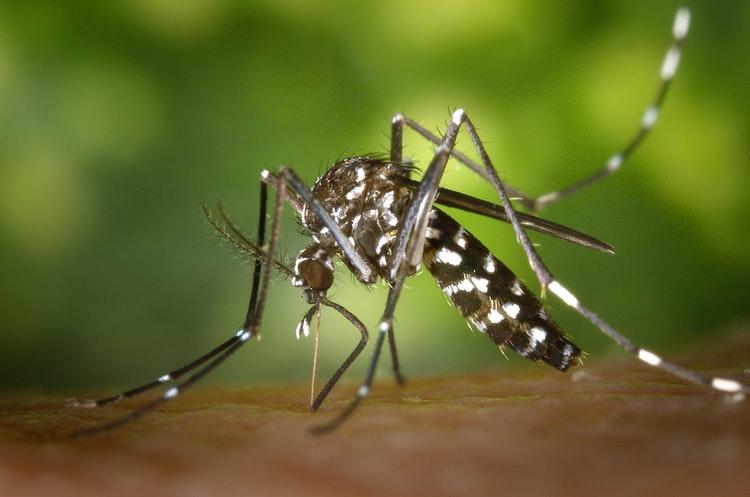 durham-mosquito-extermination