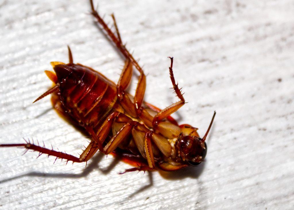 cockroach-extermination-fuquay-varina