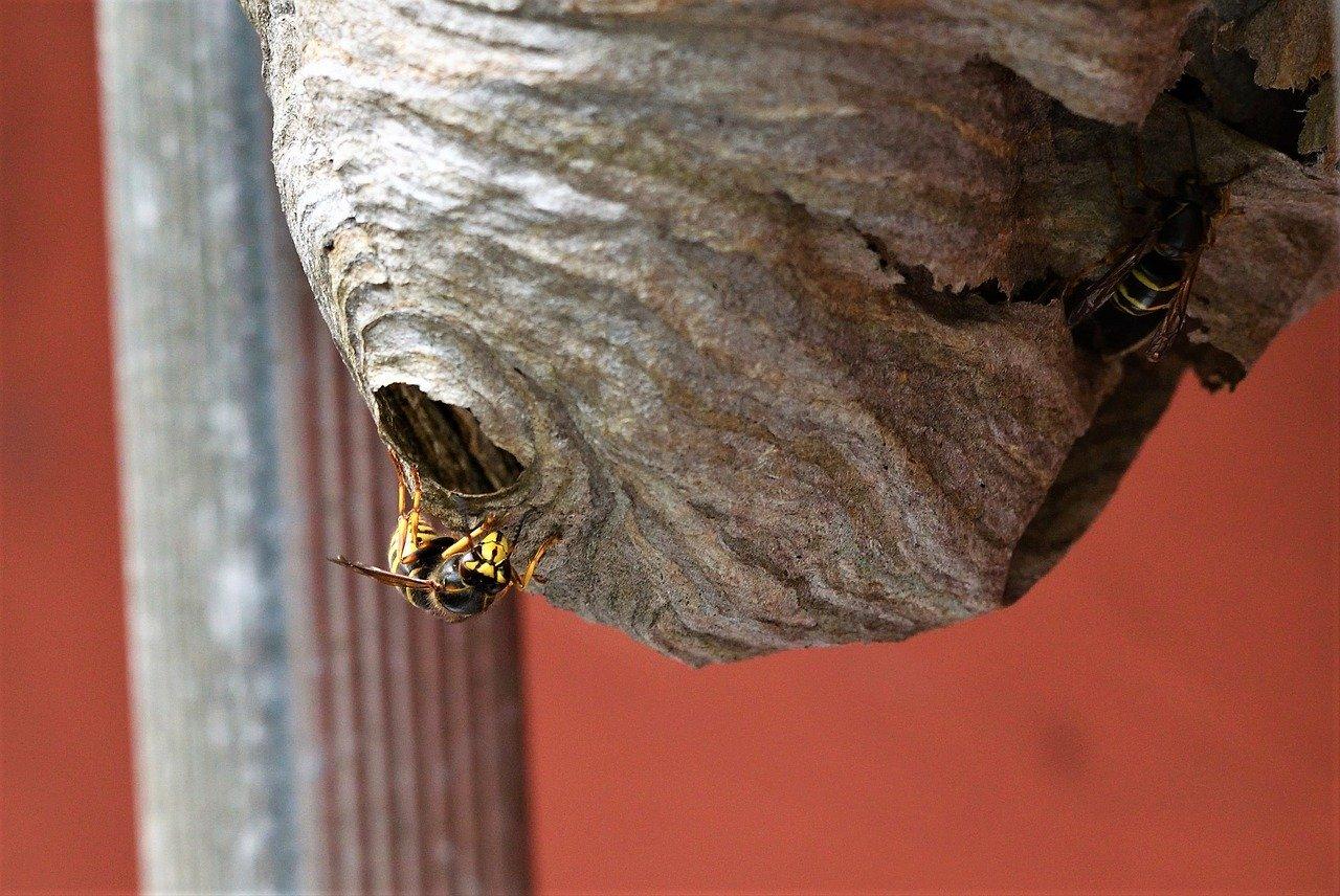 wasp-extermination-fuquay-varina