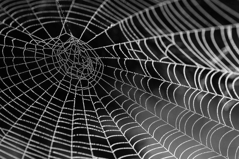 spider-extermination-fuquay-varina