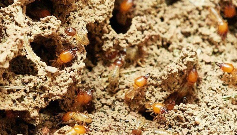 termite-control-fuquay-varina