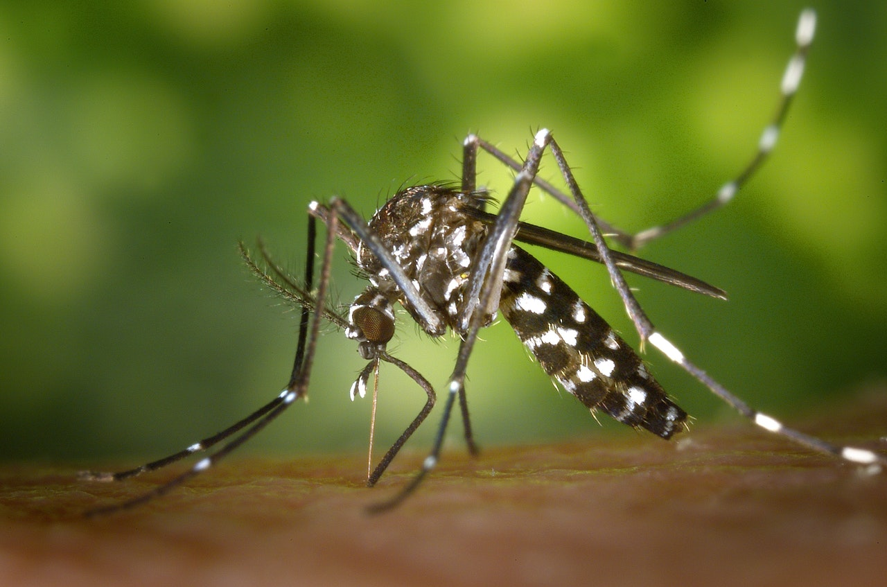 mosquito-control-holly-springs