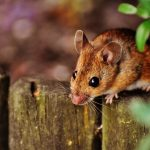 raleigh rodent exterminators