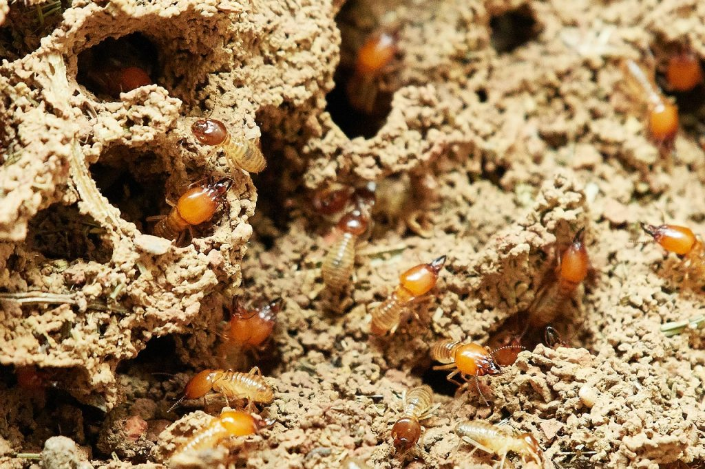 termite control willow springs