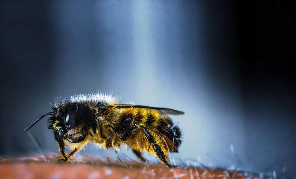 Bees Control in Raleigh and surrounding area.
