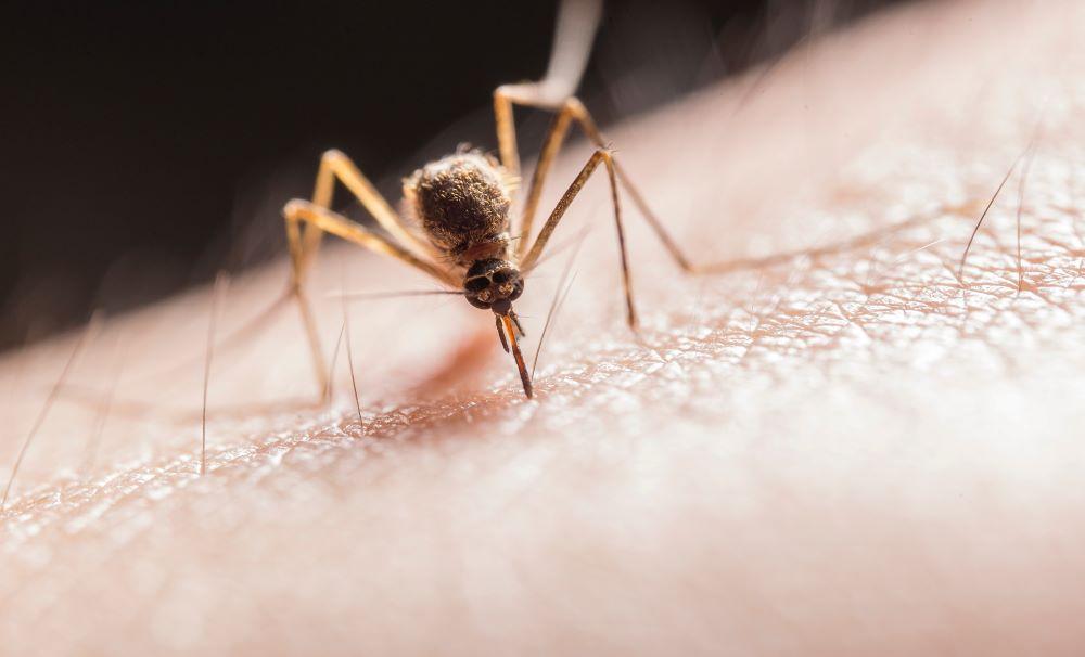 Mosquito Control in the triangle area.