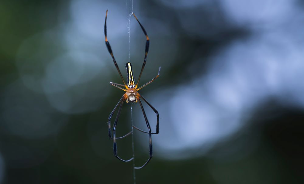 Spider Extermination & Removal in Raleigh